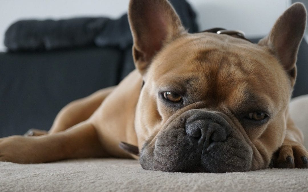 10 Warning Signs of Cancer in Pets